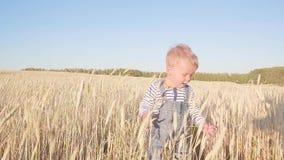Liten bonde Lycklig ung pojkespring på fält med mogen råg på ultrarapid för solig dag Begrepp stock video