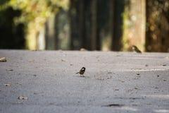 Liten borttappad fågel Arkivbild