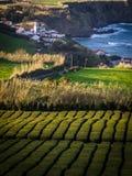 Liten bosättning på den Azorean kusten Royaltyfri Bild