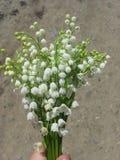 Liten bouchet för vita blommor Royaltyfri Fotografi