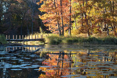 Liten bro över en kanal på skogsjön fotografering för bildbyråer