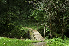 Liten bro över liten vik i skogen Arkivbilder