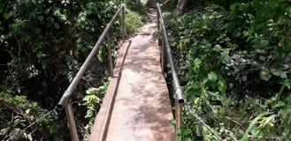 Liten bro i mest florest på Itamatamirim, inre av Pernambuco, Brasilien royaltyfria foton