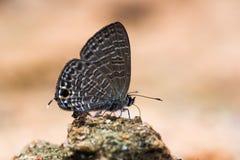 Liten brun fjäril på sand- och apelsinbakgrund Royaltyfria Bilder