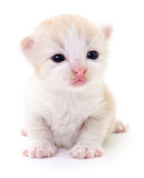 Liten brun kattunge Arkivfoton