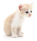 Liten brun kattunge Arkivbild