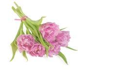 Liten bukett av rosa tulpan Arkivbilder