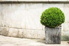 Liten buske Arkivfoto