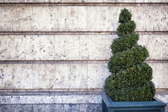 Liten buske Arkivbild
