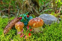 Liten champinjon i skogen bland mossan Arkivbild