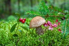 Liten champinjon i skogen bland mossan Royaltyfri Fotografi