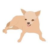 Liten chihuahua 1 stock illustrationer