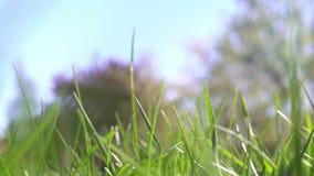 Liten djur varelsespring till och med ett gräs som kilar till och med slingan - POV-punkt av sikten stock video