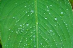 Liten droppe av vatten på det gröna bladet Arkivbild