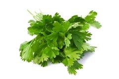 liten droppe isolerade parsleyvattenwhite Royaltyfri Fotografi