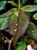 liten droppe låter vara vatten Arkivfoto