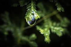 Liten droppe med en reflexion Royaltyfri Fotografi