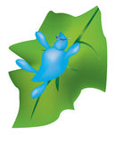 liten droppe på ett grönt blad Royaltyfri Foto