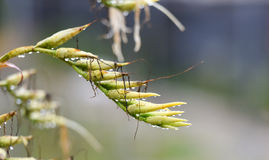 Liten droppe på växtblommaknoppen Royaltyfri Fotografi