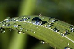 liten droppe som reflekterar sunen Arkivbilder