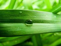 Liten droppe som svaller ner grässtrået Arkivbild