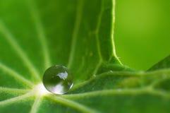 liten droppeleafvatten Royaltyfria Foton