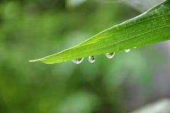 liten droppeleafvatten Royaltyfria Bilder