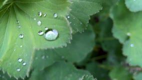 liten droppeleafvatten Fotografering för Bildbyråer