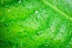 liten droppeleavesvatten Royaltyfria Bilder