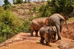 Liten elefant som spelar med gyttja arkivfoton