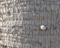 Liten ensam snigel på en palmträd arkivfoto