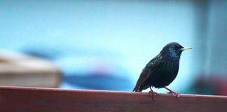 Liten färgglad fågel Arkivbilder