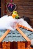 Liten färgrik fågelleksak Arkivfoton