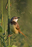 liten fågel Royaltyfria Foton