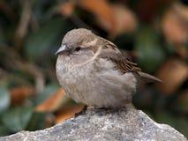 Liten fågel Arkivfoto
