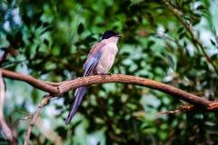 Liten fågel Arkivbild