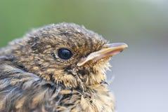 liten fågel royaltyfri foto