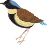 liten fågel Royaltyfri Fotografi