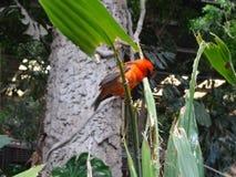 Liten fågel för Hornbill royaltyfria foton
