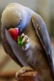 Liten fågel för papegoja på telefonen Royaltyfria Foton