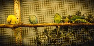 Liten fågel för papegoja på telefonen Arkivfoto