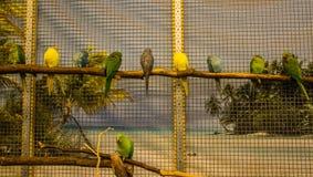 Liten fågel för papegoja på telefonen Royaltyfria Bilder