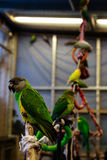 Liten fågel för papegoja på telefonen Arkivbild
