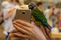Liten fågel för papegoja på telefonen Arkivbilder
