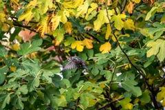Liten fågel, framme av en fikonträd royaltyfri bild