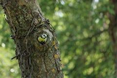 Liten fågel i ihåligt träd royaltyfria foton