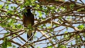 Liten fågel i tjockt träd stock video