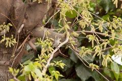 Liten fågel i träd Arkivbild