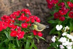 Liten fågel i trädgård Royaltyfria Foton
