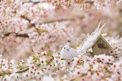 Liten fågel och voljär i vår med körsbärsröd blomma s för blomning Fotografering för Bildbyråer